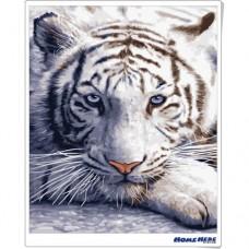 數字油畫  白色老虎