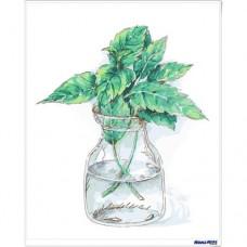 數字油畫 小清新 蔥蔥綠葉